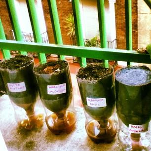 """Učesnica ovogodišnje akcije """"Izdrži i održi!"""" Nina Pantelić zasadila je bosiljak, peršun i druge biljke na svojoj terasi u Madridu koristeći reciklirane saksije."""
